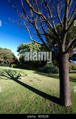 The shadow of a bare tree in winter, Seville, Spain - Stock Photo