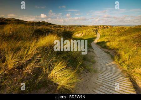 Wooden boardwalk running through sand dunes at Braunton Burrows in North Devon UK - Stock Photo