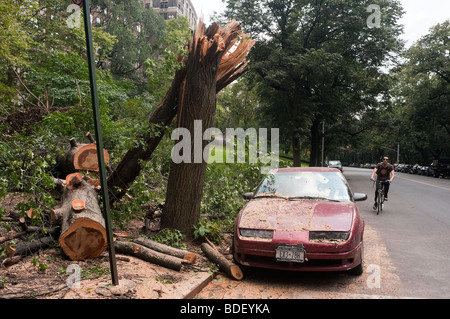 New York City, NY Toppled tree and car damaged during a storm - Stock Photo