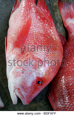 red snapper named Bourgeois on Victoria's market - Mahé - Seychelles - Stock Photo