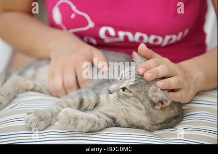 Animal love, tabby cat enjoys being petted - Stock Photo