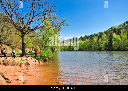 Badeweiher Seehof lake, Erlenbach, Naturpark Pfaelzerwald nature reserve, Palatinate, Rhineland-Palatinate, Germany, - Stock Photo