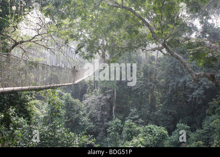 Tourists on tree top canopy walk way high at the top of the forest. Tour of Kakum National Park. Near Cape Coast. - Stock Photo