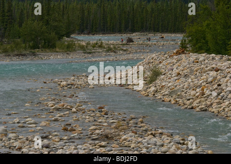 Snaring River, Jasper National Park, Alberta, Canada - Stock Photo