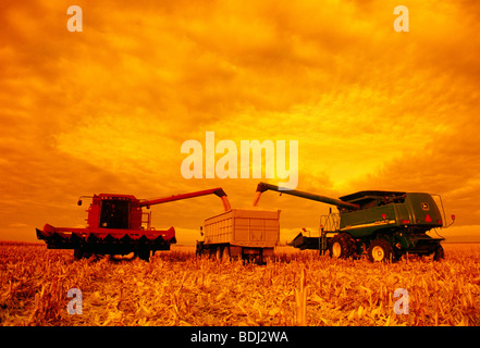 Two combines unload freshly harvested grain corn into a grain truck in the field in late afternoon light / Manitoba, - Stock Photo