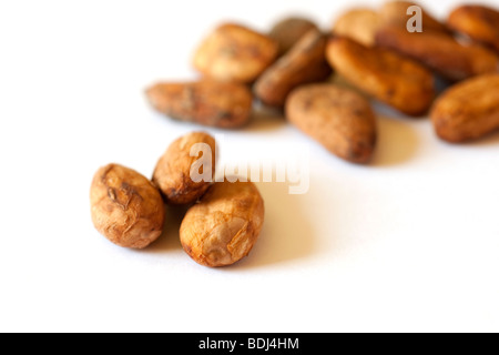 Dried cocoa (Theobroma cacao) seeds on a white background - Stock Photo