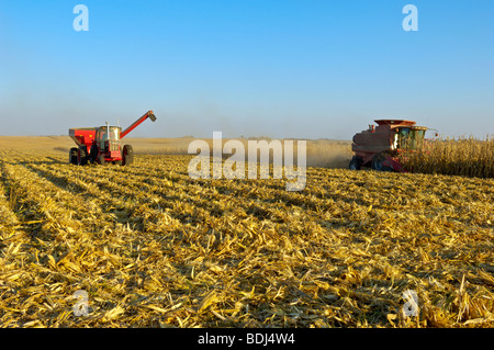 A combine harvests a crop of grain corn in a large grain field, with a grain cart running alongside nearby / Iowa, - Stock Photo