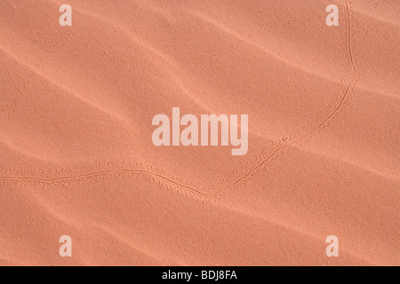 beetle track in sand - Stock Photo