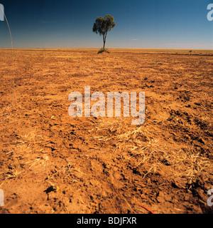 Lone Tree on a Barren Plain