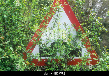 Red and white triangular roadsign warning of hump back bridge but almost totally obscured by foliage - Stock Photo