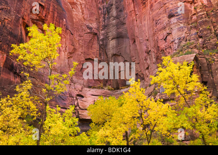 Fall color and red sandstone cliff at the Temple of Sinawava, Zion National Park, Utah - Stock Photo