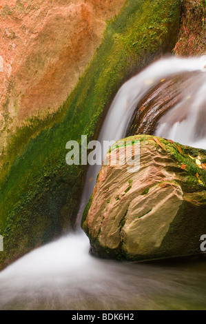 Stream below the Weeping Wall, Zion National Park, Utah - Stock Photo