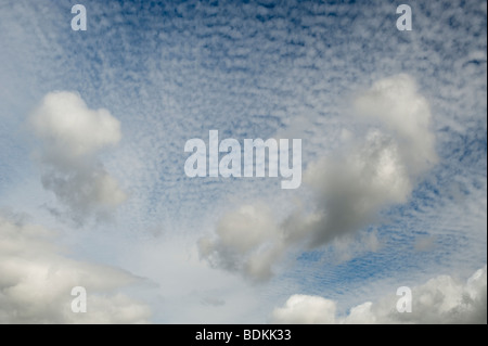 Altocumulus undulatus clouds - Stock Photo