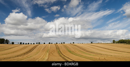 Harvested wheat field, in the English countryside. Cotswolds, Gloucestershire, England - Stock Photo