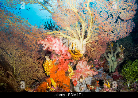 A bright and colorful tropical reef scene with fans, soft corals and fish - Stock Photo