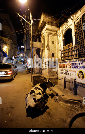 The Holy Cow night in the streets of Udaipur, Rajasthan, India, Asia - Stock Photo