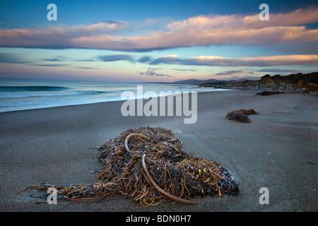 Died kelp and dawn sky, Moonstone Beach, Cambria, Big Sur, California, USA. - Stock Photo