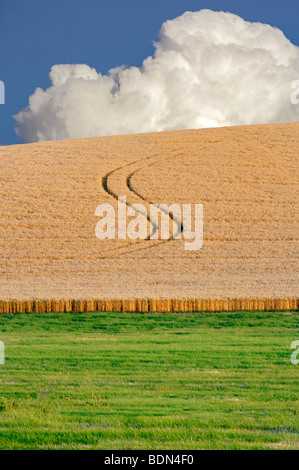Tractor lines in wheat field. The Palouse. Washington - Stock Photo