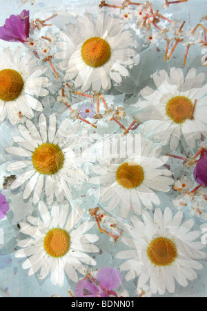 A Floral montage - Stock Photo