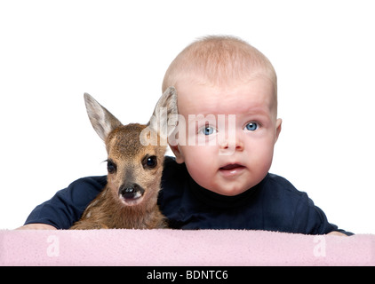 Portrait of baby boy with Fallow Deer Fawn in front of white background, studio shot - Stock Photo
