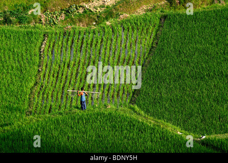 Members of the Miao minority at work in the rice terraces of Xijiang, Guizhou, South China, China, Asia - Stock Photo