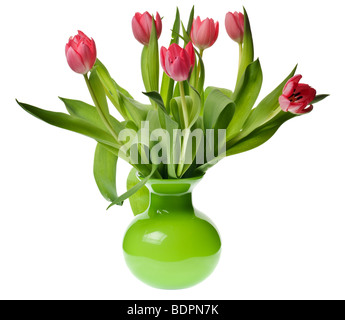 pink tulip isolated on a white background - Stock Photo