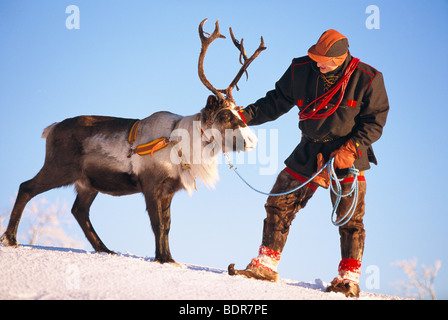 A Laplander and a reindeer, Lapland, Sweden. - Stock Photo
