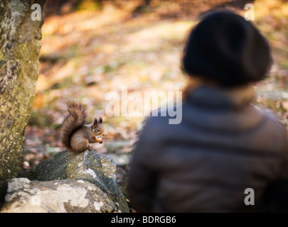 Girl looking at a squirrel - Stock Photo
