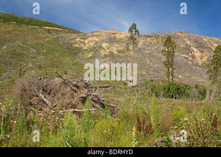 radical felling of trees on picturesque Kenepuru Sound, Marlborough Sounds, South Island, New Zealand - Stock Photo