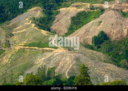 Deforestation, radical felling of trees on picturesque Kenepuru Sound, Marlborough Sounds, South Island, New Zealand - Stock Photo