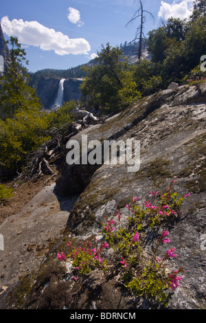 Spring wildflowers grow through crack in granite with Nevada Falls seen in background. - Stock Photo
