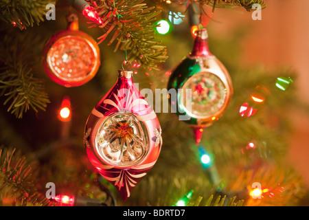 Traditional Christmas Lights on Trees VanDusen Botanical Garden