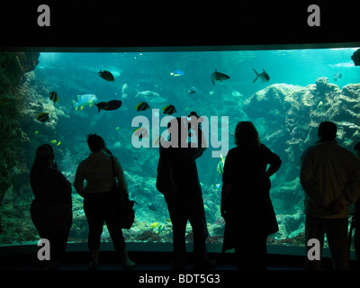 Tourists looking at a very large sea aquarium in Oceanopolis, Brest, Brittany, France - Stock Photo