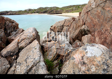On the rocks above Oldshoremore, near Kinlochbervie, Sutherland, Scotland - Stock Photo