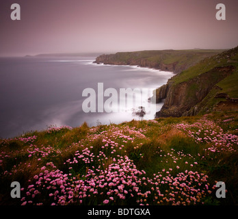 Sea Thrift growing on the clifftops above Land's End, Cornwall, England. Spring (May) 2009 - Stock Photo