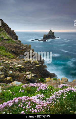Thrift growing on the cliffs of Land's End, looking towards the Armed Knight rock stack, Cornwall, England. Spring - Stock Photo