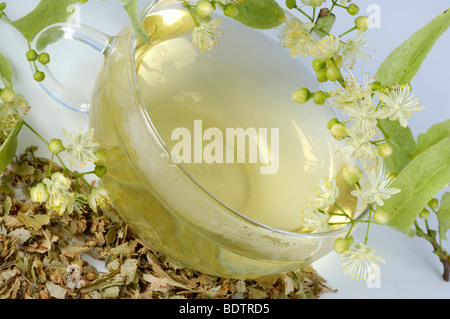 Lime, a cup of tea and dried blooms / (Tilia tomentosa) - Stock Photo