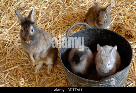 rabbits in bucket - Stock Photo