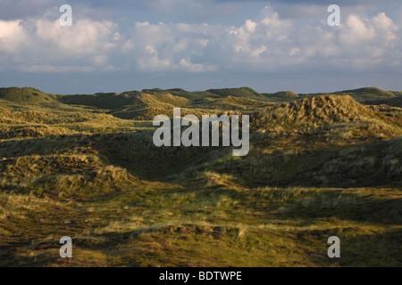 Duenenlandschaft, Dune scenery / Jylland - Denmark - Stock Photo