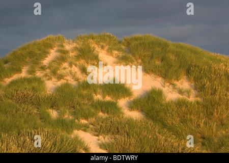 Duenenlandschaft / Dune (dene) scenery / Jylland - Daenemark - Stock Photo