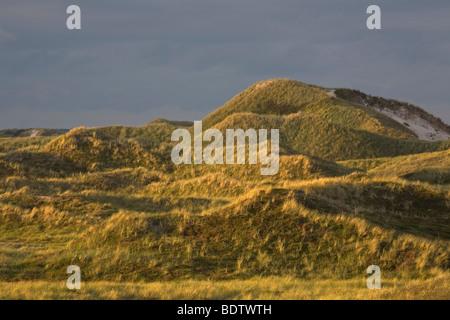 Duenenlandschaft, Dune (dene) scenery, Jylland - Daenemark - Stock Photo