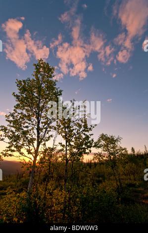 landschaft bei mitternachtssonne in gaellivare, lappland, schweden, landscape at midnight sun in lapland, sweden - Stock Photo
