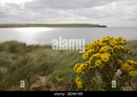 kueste der hauptinsel mainland der orkney-inseln, coast of mainland, orkney islands, scotland, schottland - Stock Photo
