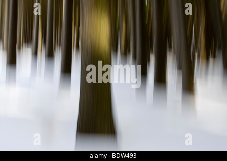 Blurry winter forest in the Harz Mountains, Germany - Stock Photo