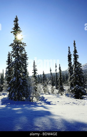 winterlandschaft im muddus national park, welterbe laponia, lappland, norrbotten, schweden, wintery landscape, lapland, - Stock Photo