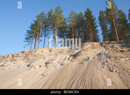 Pine ( pinus sylvestris ) trees growing on top of a sandy ridge , Finland - Stock Photo