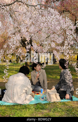 Cherry Blossom Festival at the Kyoto Botanical Garden, picnic under the blossoming tree in Kyoto, Japan, East Asia, - Stock Photo