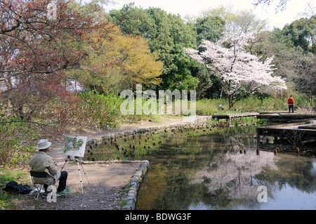 Japanese man painting a flowering cherry tree in the Kyoto Botanical Garden, a popular hobby among Japanese seniors, - Stock Photo