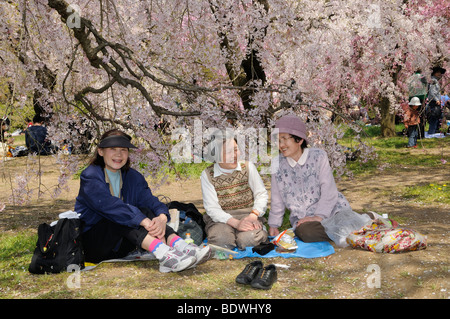 Cherry Blossom Festival at the Kyoto Botanical Garden, picnic under a blossoming tree in Kyoto, Japan, East Asia, - Stock Photo