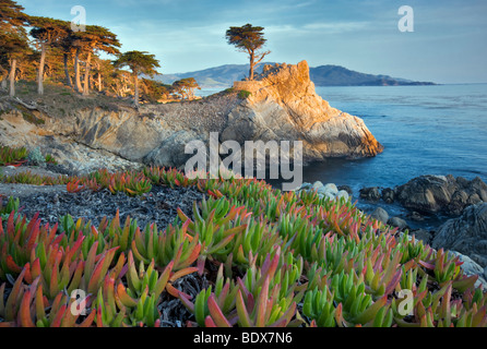 Lone Monterey Cypress tree and Pacific Ocean with Ice Plant. 17 Mile Drive. Pebble Beach, California - Stock Photo